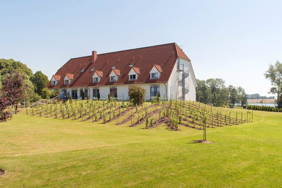 Cambs, Alemania: Unser Weinberg