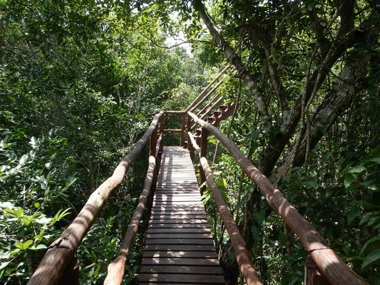 Selva Maya Eco Adventure: stairs to get to one of the ziplines