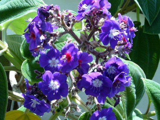 Quinta Jardins do Lago: Flowers