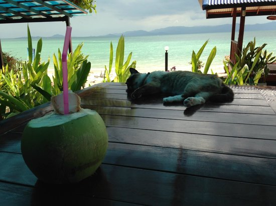 Rung Arun Resort: Lots of cats and coconuts!