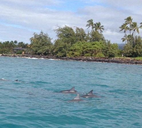 koloa landing dive site picture of kauai down under dive. Black Bedroom Furniture Sets. Home Design Ideas
