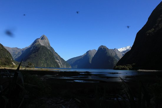 "Milford Sound : Milford and the ""wee vampires"" or native sand flies."