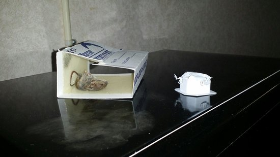 Americas Best Value Inn: The mouse and the packet of butter eaten by it or another mouse.