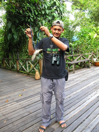 Sukau Rainforest Lodge: Our guide holding a freshwater prawn, tasty!!!!!