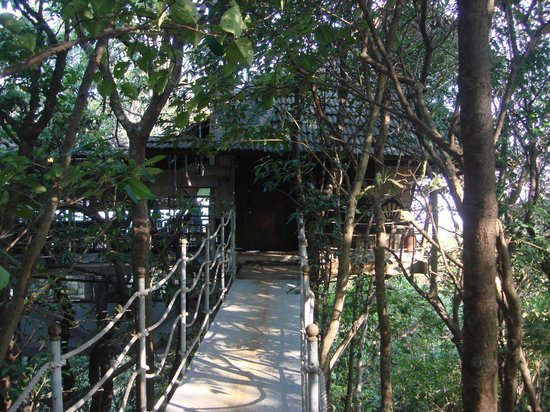 The Machan: Tree House Room Entrance