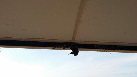 Americas Best Value Inn: Dead bird hanging from roofing in walkways.