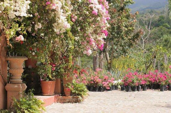Vallarta Botanical Gardens: near gift shop