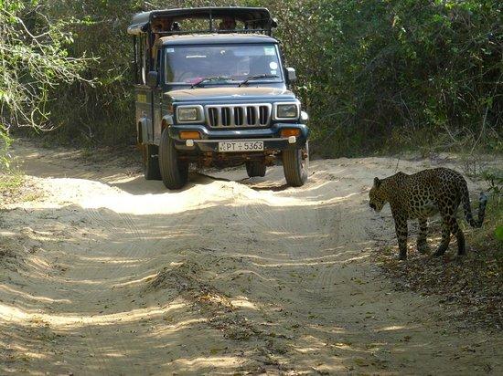 Select Sri Lanka Day Tours: jeep tour in Wilpattu national Park