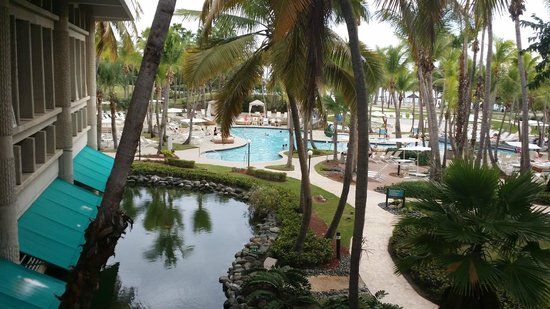 Hilton Ponce Golf & Casino Resort : beautiful pool