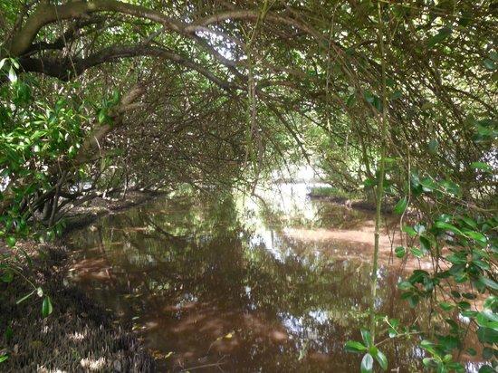 Labadi Beach Hotel : Beautiful Canal on grounds of hotel