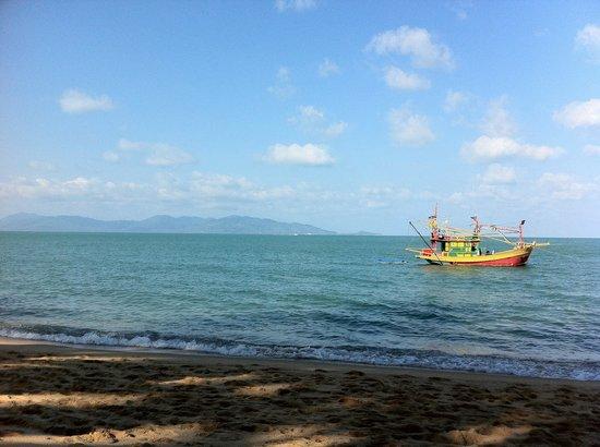 Shady Resort: The beach