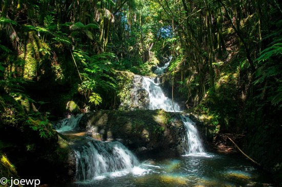 Hawaii Tropical Botanical Garden: Onomea Falls
