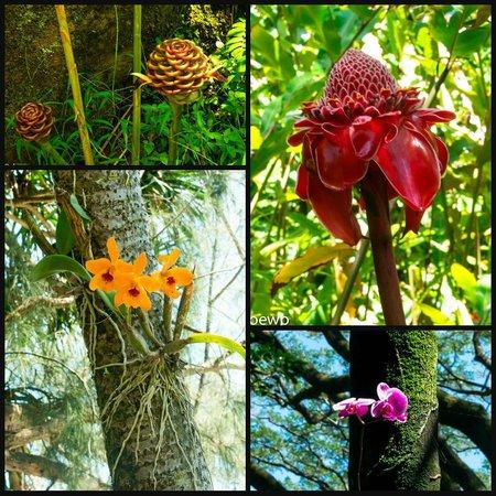 Hawaii Tropical Botanical Garden: Flora from the garden
