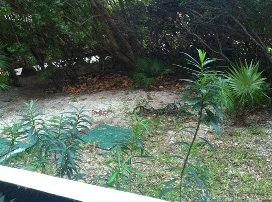 "Now Sapphire Riviera Cancun : ""Garden"" Tropical view room 1405"