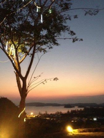 The Hilltop : un bel arbre