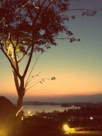 The Hilltop : bel arbre 2