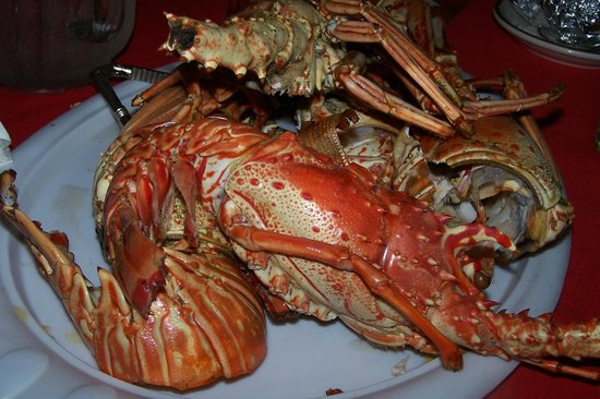Harris' Place : The lobster!