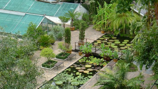Stellenbosch University Botanical Garden: Water-lily pools