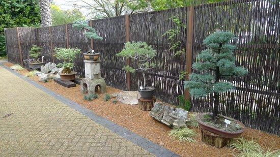 Stellenbosch University Botanical Garden: Bonsai collection