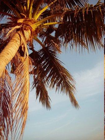 The Frangipani Langkawi Resort & Spa: растут кокосы высоко