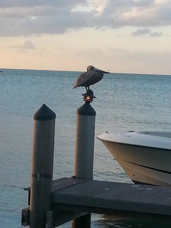 Hyatt Windward Pointe: Pelican meditating