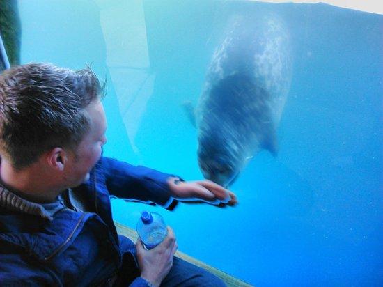 Scarborough SEA LIFE Sanctuary: Seals!