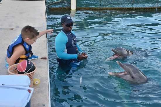 Dolphin Discovery Grand Cayman: Making them sing