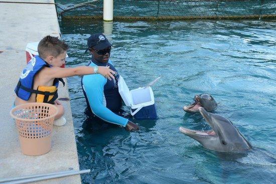 Dolphin Discovery Grand Cayman: Feeding them