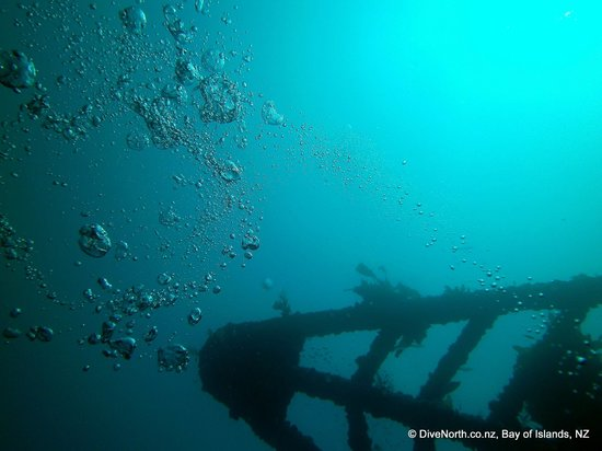 Dive North: Rainbow Warrior Bow Sprit