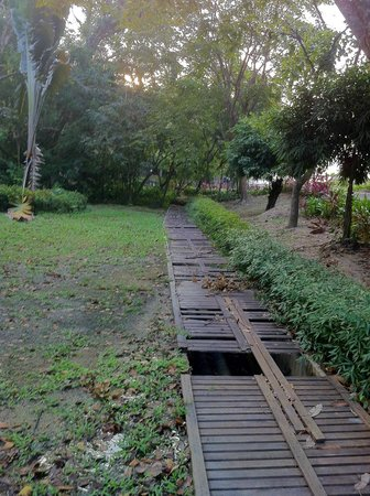 Century Langkawi Beach Resort: vackra trädgårdar?