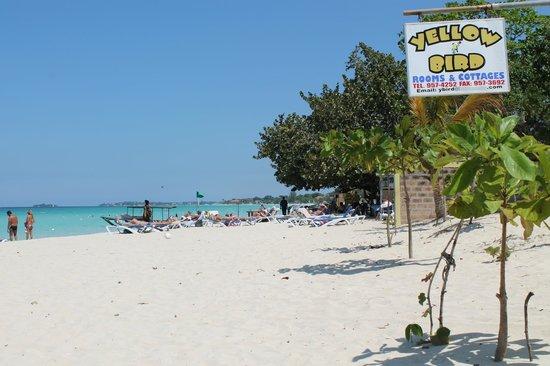 The Yellow Bird: yellow bird beach