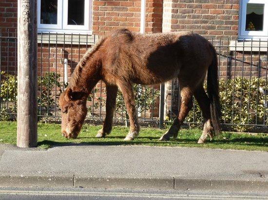 Beech Lodge Bed and Breakfast : Horses in Brockenhurst