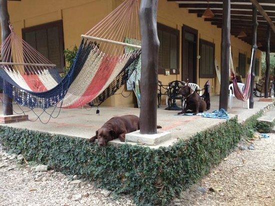 Safari Surf School: Nosara Hostel - Great Vibe, great people