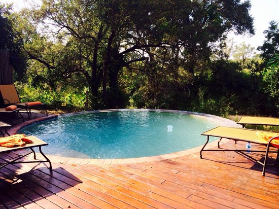 Hoyo-Hoyo Safari Lodge: Swiming pool area