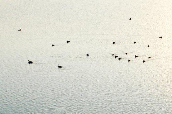 Kaylana Lake : Kailana Lake