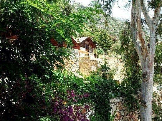 Aga Motel Bungalows: bahçeden bungalowlar