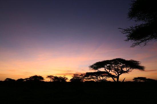 Ndutu Wildlands Camp : vue de la chambre coucher du soleil