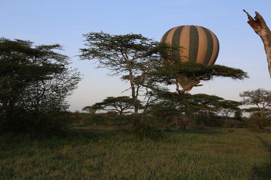 Ndutu Wildlands Camp: vue