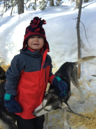 Monarch Dog Sled Rides: Getting to know the dogs before we left for the ride.