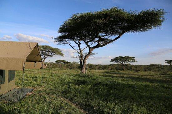Ndutu Wildlands Camp: les tentes