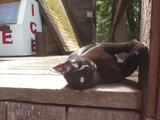 Redwoods River Resort & Campground: Ms. Kitty Purreee enjoying the sun deck