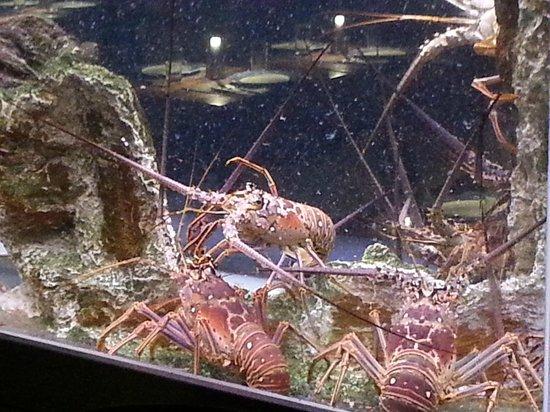 Santa Fe: Lobster tank