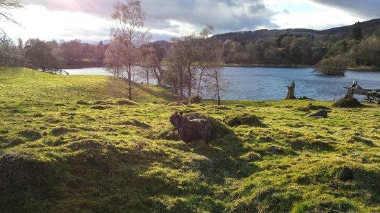 Loch Monzievaird Self Catering Lodges : Loch
