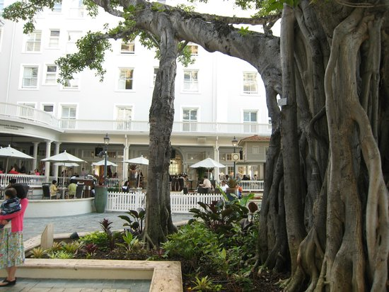 Moana Surfrider, A Westin Resort & Spa: Banyan tree trunk
