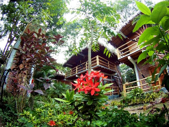 Bromelia Mind Body And Soul Review Of Bromelia Nature Lodge