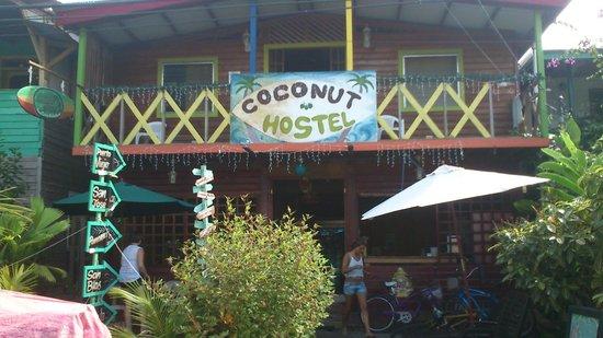 Coconut Hostal: Coconut Hostel