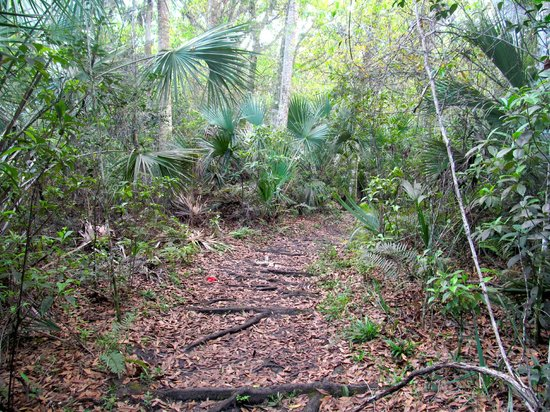 Fern Forest Nature Center: Walking on the trail