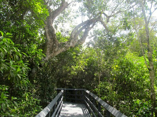Fern Forest Nature Park: View on the boardwalk