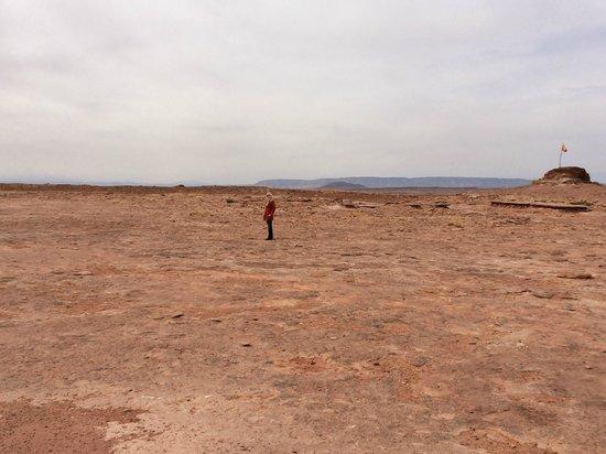Dinosaur Tracks: Vast and Remote