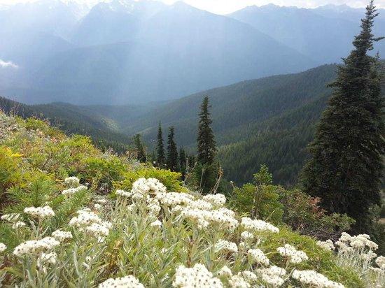 Lost Mountain Lodge: Sun Beam, Hurricane Hill Hike near the Marmot den